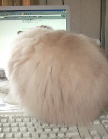 2007_0420猫写真0002