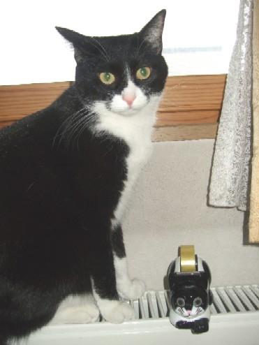 2007_1229猫写真0012