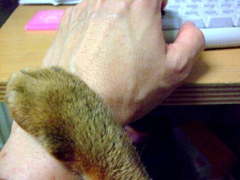 2007_0909猫写真0003