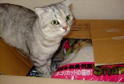 2007_0823猫写真0025