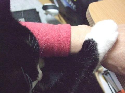2007_0417猫写真0076