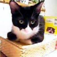 ウラン子猫3