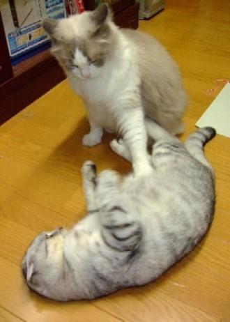 2007_0901猫写真0012_1