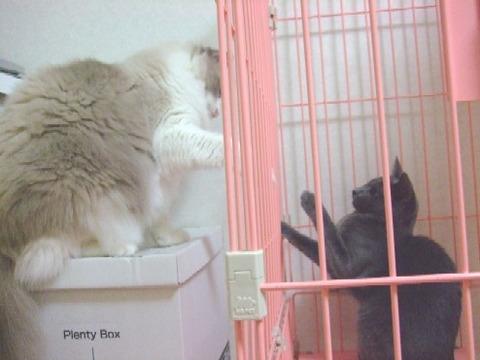 2007_1004猫写真0020