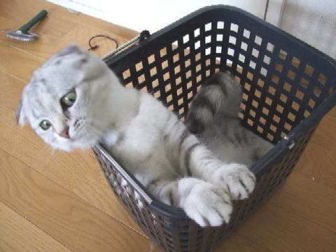 2007_0529猫写真0009