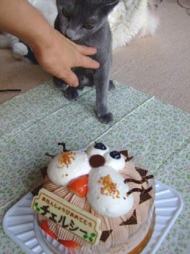 2007_1212猫写真0017