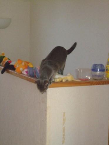 2007_1107猫写真0015