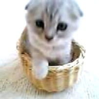 マリン子猫2