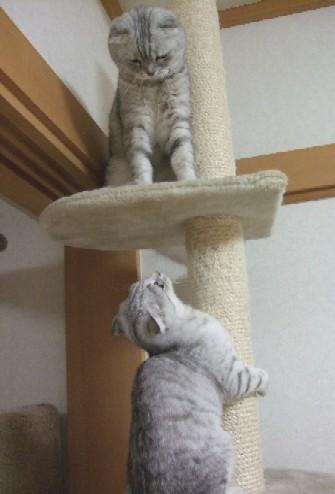 2007_0430猫写真0090