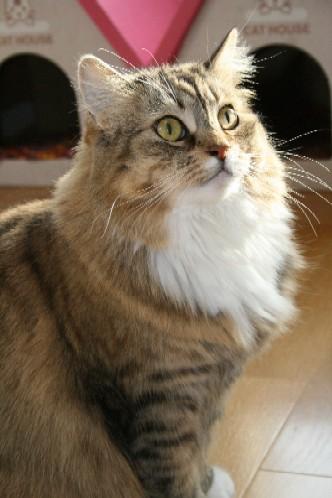 「猫だらけ」つみき.jpg2