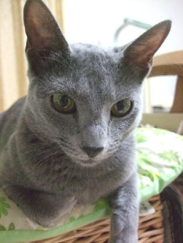 2008_0315猫写真0065