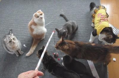 猫だらけの写真