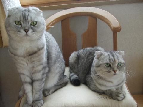 2008_0221猫写真0023