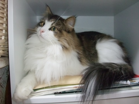 「猫だらけ」チェルシー