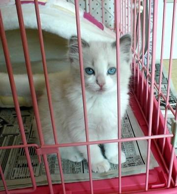ティファニー子猫1