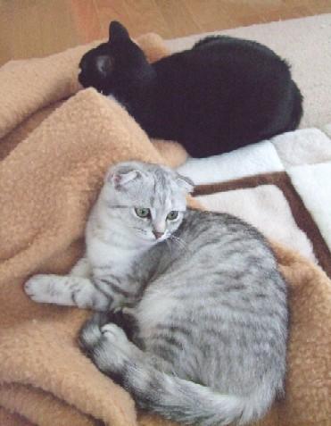 2007_0406猫写真0058