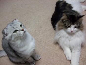 2007_0524猫写真0011