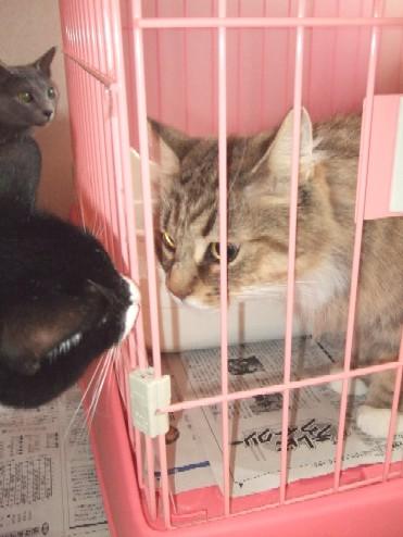 2008_0202猫写真0051