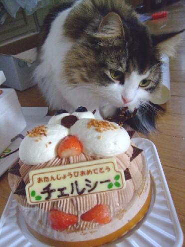 2007_1212猫写真0021