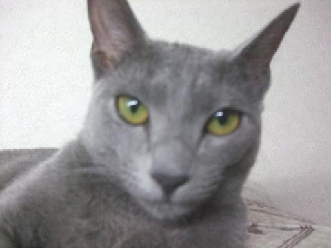 2007_1231猫写真0005