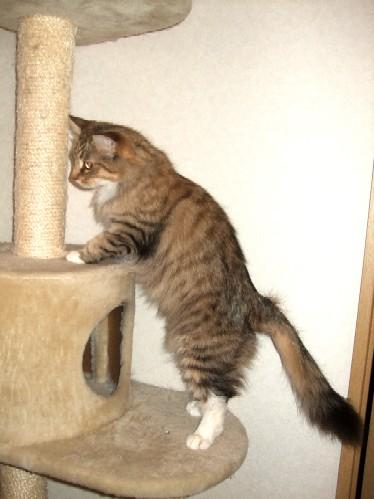 2008_0205猫写真0024