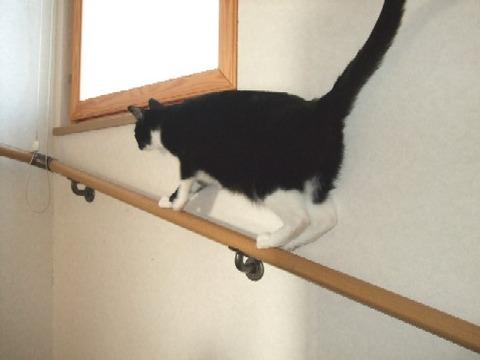 2008_0330猫写真0023