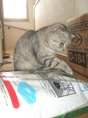 2008_0222猫写真0038