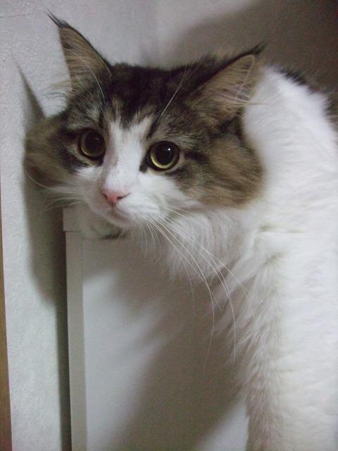 「猫だらけ」チェルシー4
