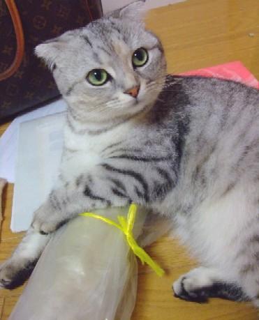2007_1124猫写真0023