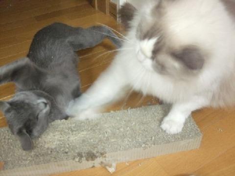 2008_0304猫写真0064