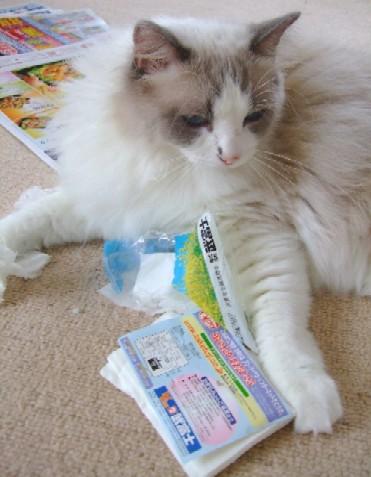 2007_0630猫写真0013