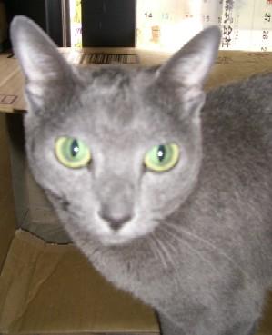 2007_0904猫写真0009