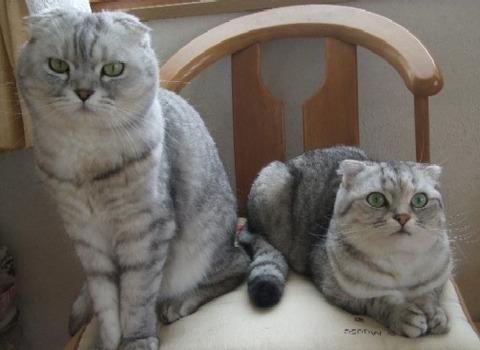 「猫だらけ」マリンとこまり2.jpg2