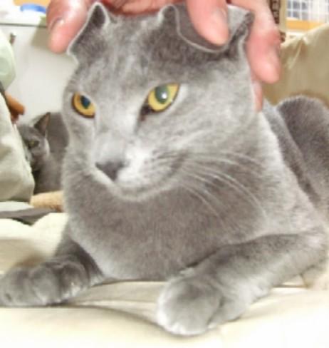 2008_0511猫写真0036