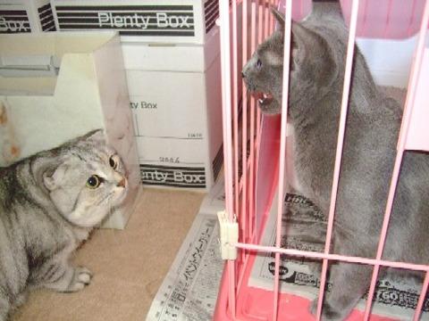 2007_0930猫写真0111