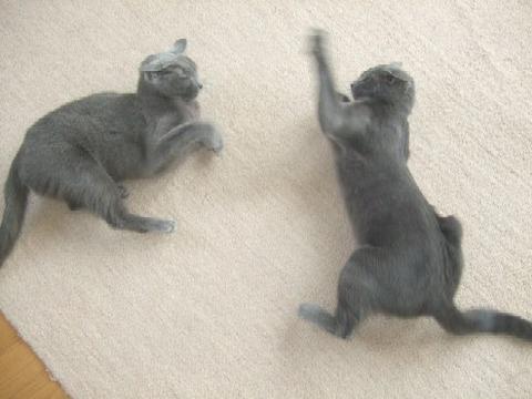 2008_0114猫写真0039