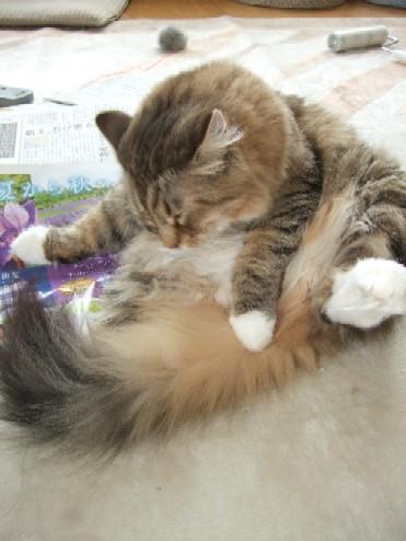 2008_0518猫写真0009