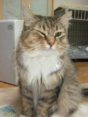 2008_0315猫写真0057