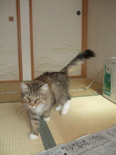 2008_0203猫写真0036