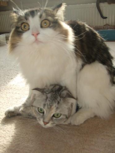 2008_0123猫写真0015