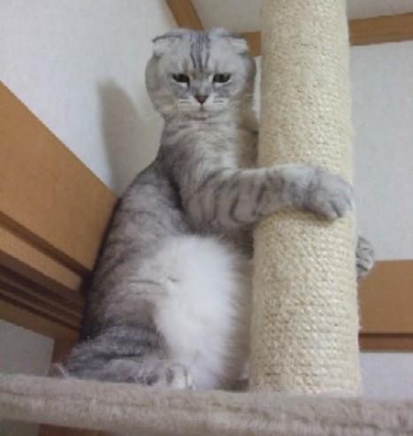 2007_0430猫写真0085