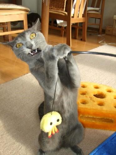 2008_0108猫写真0038