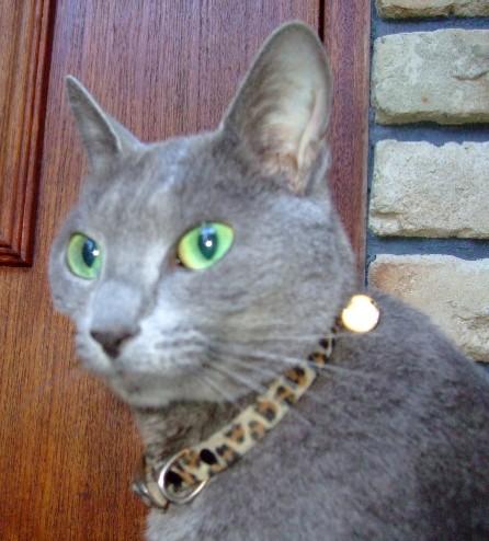 2007_0725猫写真0034