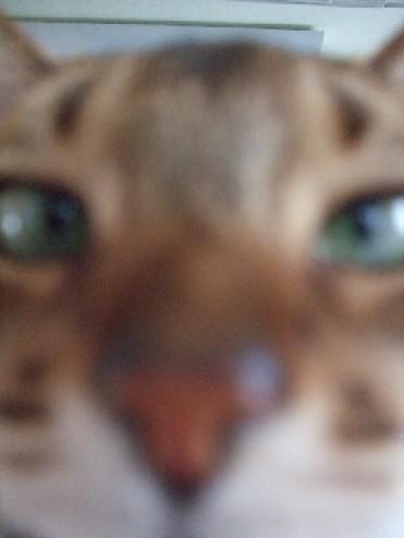 2007_0429猫写真0015