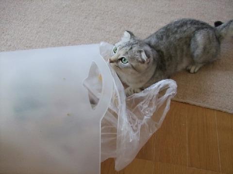 2007_0528猫写真0061