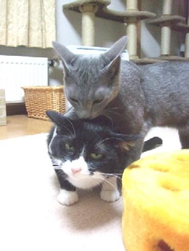 2008_0108猫写真0072