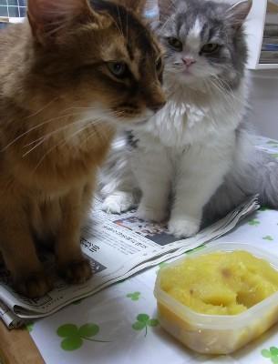 「猫だらけ」