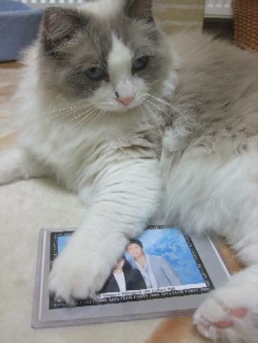 2008_0425猫写真0048