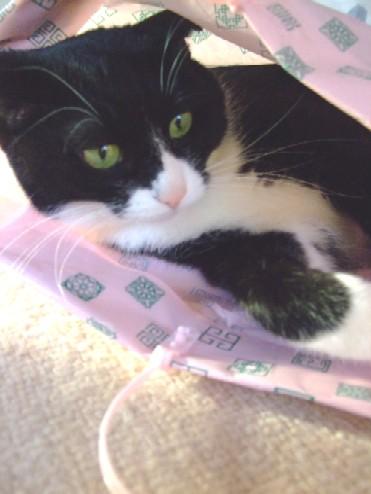 2007_1130猫写真0017