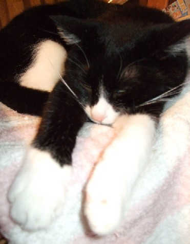 2007_0508猫写真0019